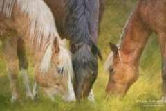 EQUINE-ERIN-HORSE-ILLUSTRATION-1