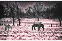 Melissa-Auchincloss-HOrses-in-winter
