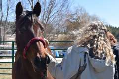 equine-erin-class