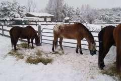 equine-erin-farm-in-winter
