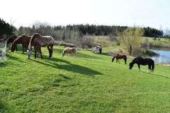 equine-erin-field-of-horses
