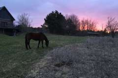equine-erin-horse-and-barn-sunset
