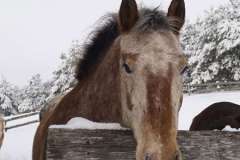 equine-erin-horses-at-fence