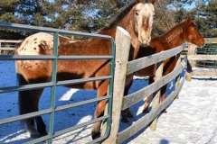 equine-erin-sideshot-horses